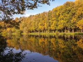 """""""Осень, прозрачное утро"""". Троицк. 7 ноября 2021"""